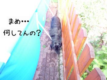2011.8.29-2.jpg